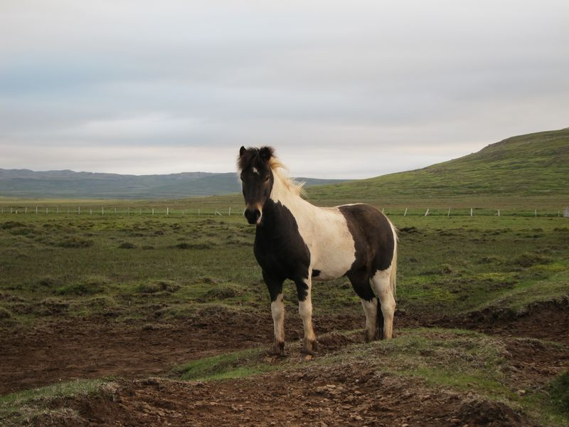 Iceland 406
