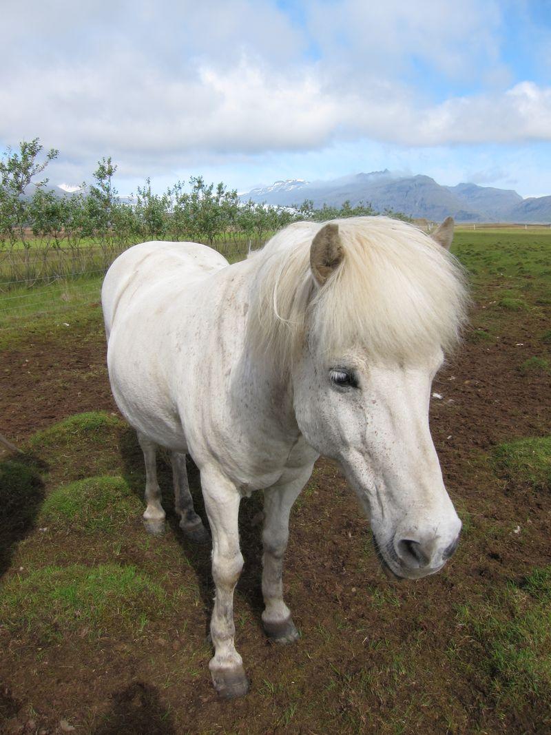 Iceland 654