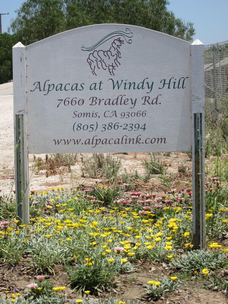 070911 windy farm alpacas 051